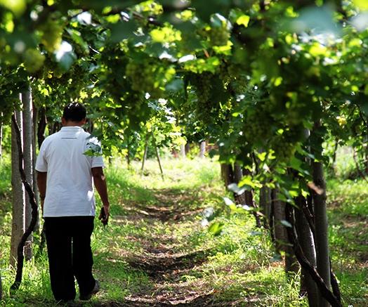 hatten-vineyard-bali_Final